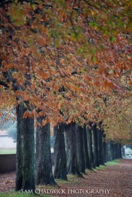 Autumn Colours in Lucca