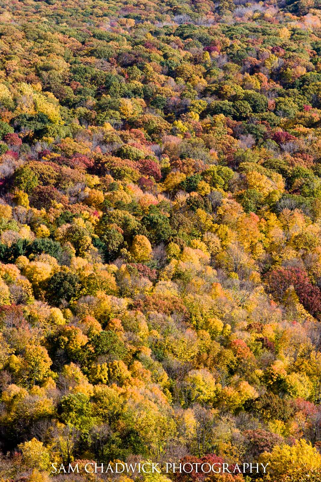 Fall colours in Upstate New York